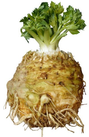 celeriac-root-with-tops-intact